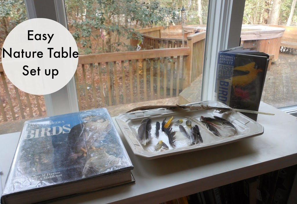 Nature study, Setting up a nature study area,Birds, nature books,natural materials,printables, Easy Nature Table,Charlotte Mason, www.naturalbeachliving.com