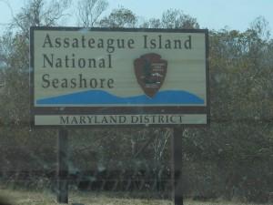 Assateague Island – Where the Ponies Run Free