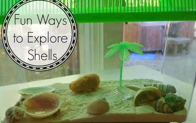 Shells, Shells, and More Shells
