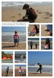 Schooling at the Beach Wordless Wednesday