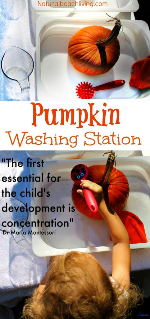 Set up a Montessori Practical Life Pumpkin Washing Station for kids, Perfect Fall Activity, Montessori Fall Activities, Pumpkin Preschool Montessori themes