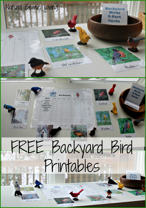 Backyard Birds, Printables,Bird watching chart, Safari Toobs,toddlers, preschool, nature, Montessori,Charlotte Mason nature study,www.naturalbeachliving.com