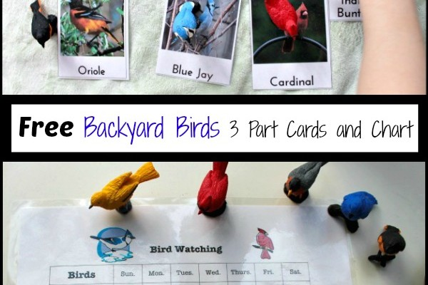 Observing & Learning Backyard Birds with Free Printables