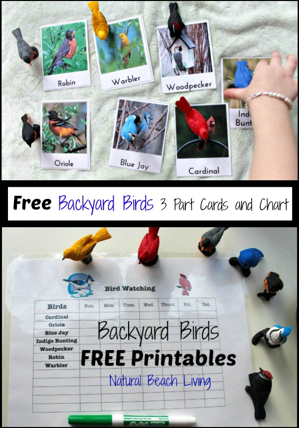 Observing and Learning about birds with free printables, bird activities