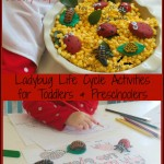 Ladybug Life Cycle Activities & Sensory Play