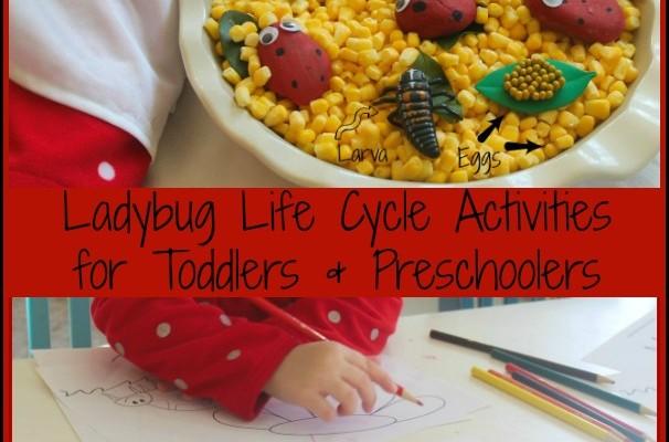 Ladybug Life Cycle Activities & Sensory Play