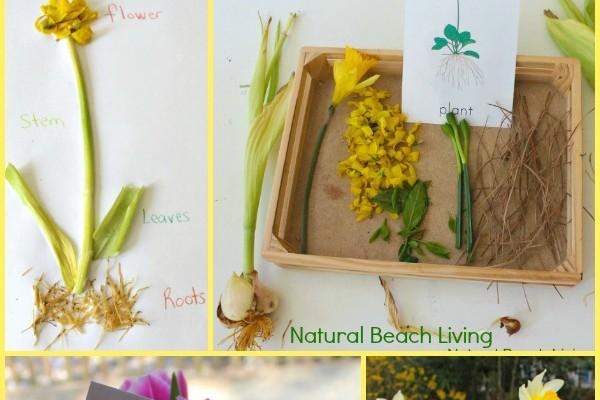 Montessori Inspired Botany for Kids