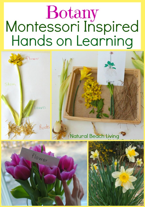 Montessori Botany Lessons, Plant science, botany printables, Nature, hands on learning, Journaling for kids, spring books, www.naturalbeachliving.com