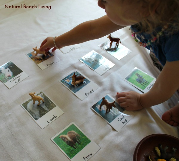 Preschool Farm Activities, Toddler, hands on learning, Montessori, Free Printables, Preschool Themes, homeschooling, Spring books,www.naturalbeachliving.com