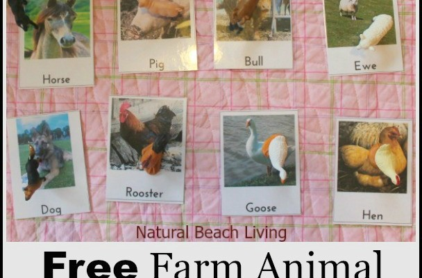 Montessori Inspired Farm Animal Activities (Free Printables)
