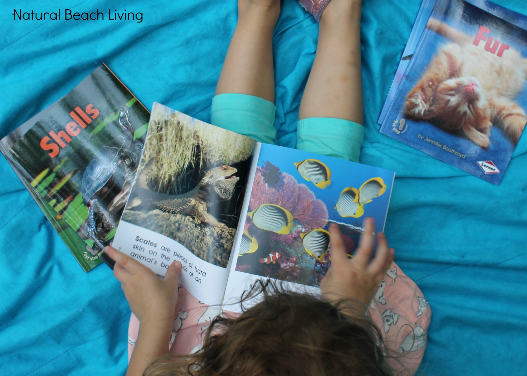 Montessori Inspired Zoology ~ Body Coverings (Free Printables ...