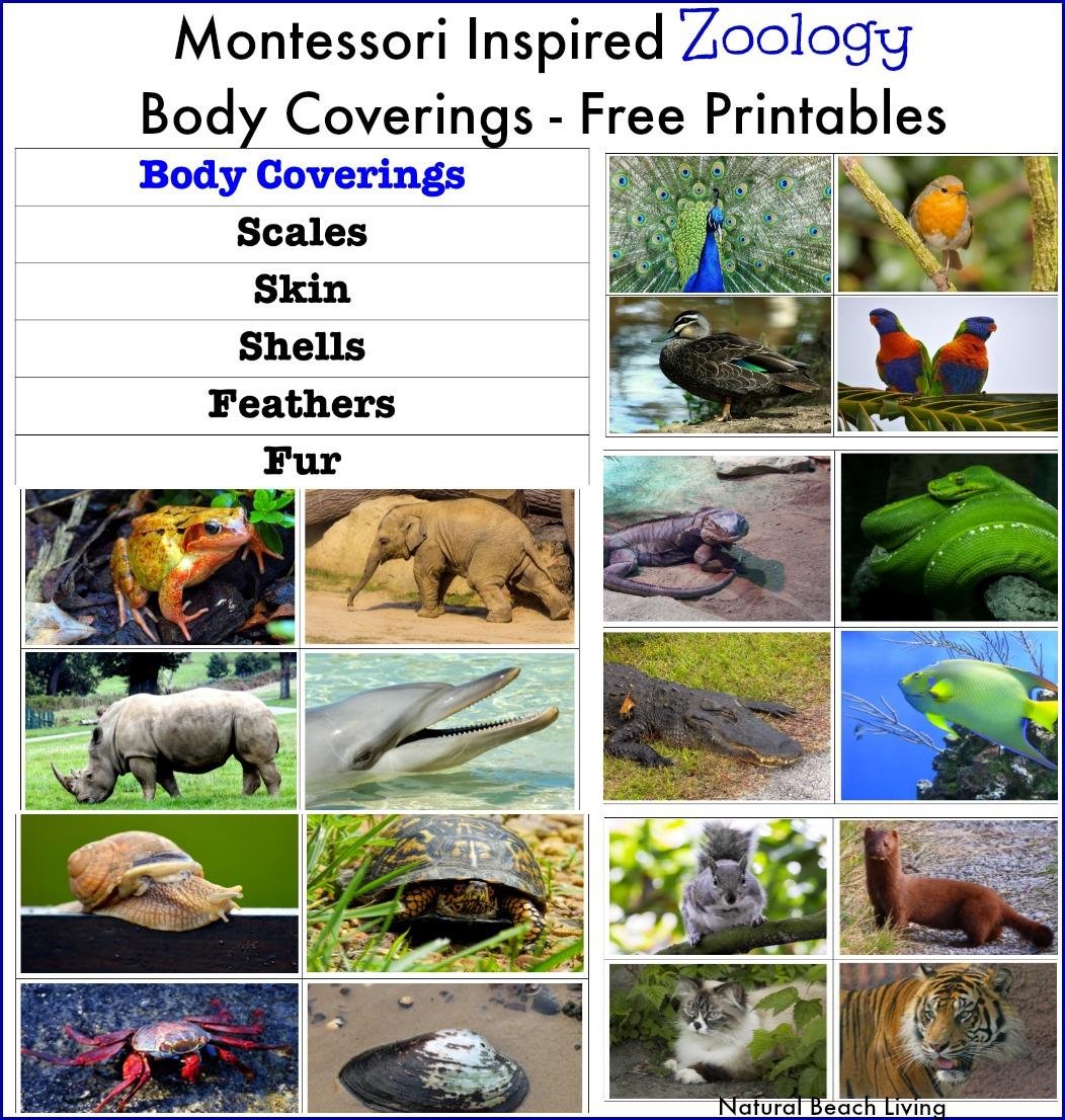 Kindergarten Worksheets Animal Coverings - plants animals ...