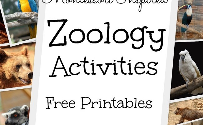 Montessori Inspired Zoology ~ Body Coverings (Free Printables)