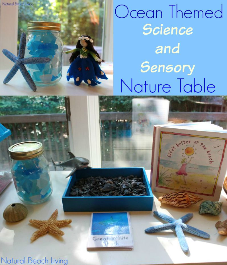 The Best Ocean Themed Science Sensory Nature Table