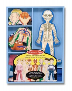human anatomy magnet set for kids