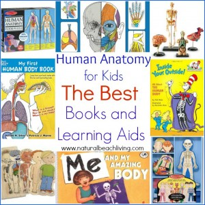 The Best Anatomy Books & Learning Aids for Kids