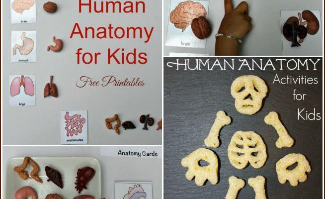 Montessori Human Anatomy Activities (Free Printables)