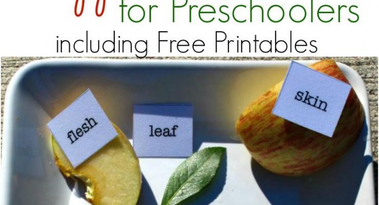 Fun Apple Activities for Preschoolers (Free Printables)