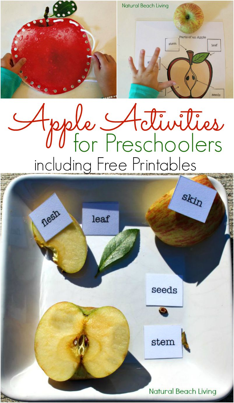 apple lessons for preschool apple activities for preschoolers apple science free 169