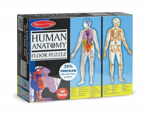 Anatomy puzzle, hands on activities