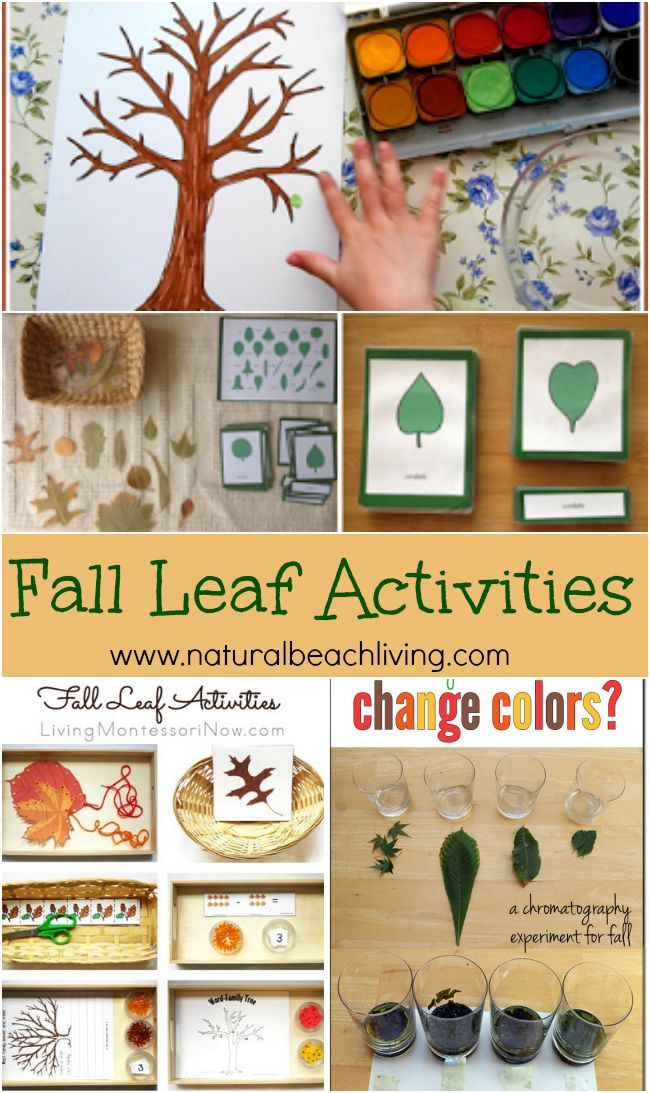 Awesome Fall Leaf Activities for Kids
