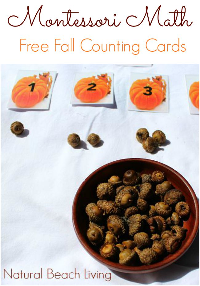 Montessori Math with Pumpkins (Free Printables) - Natural Beach Living