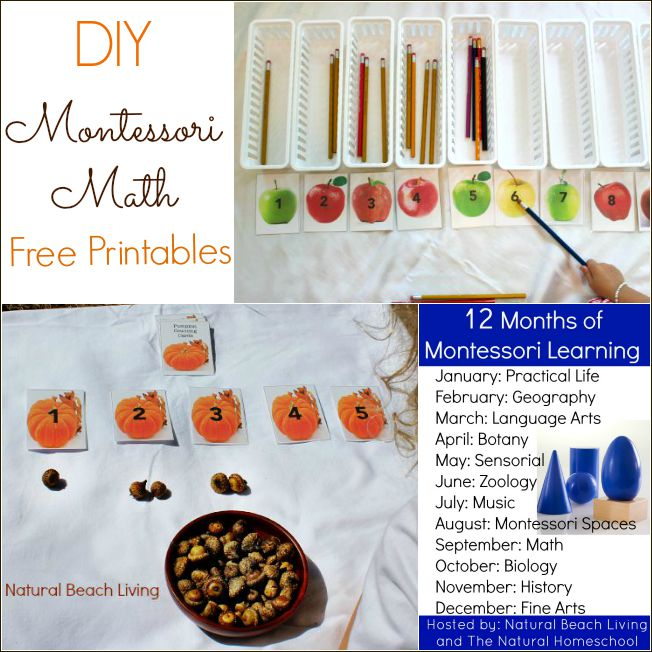 DIY Natural Fall Montessori Math, Free Fall Counting Printables, Loose parts, Natural Materials, Perfect for Preschoolers, 12 months of Montessori Learning