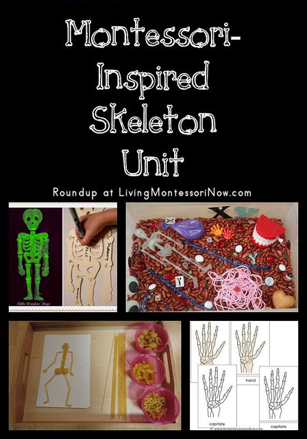 THE BEST HANDS ON LEARNING HUMAN ANATOMY ACTIVITIES, SENSORY PLAY, FREE PRINTABLES, MONTESSORI, and so much more. Perfect for a Unit Study & Biology Lessons