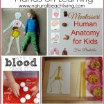 The Best Hands on Learning Human Anatomy Activities (free printables)