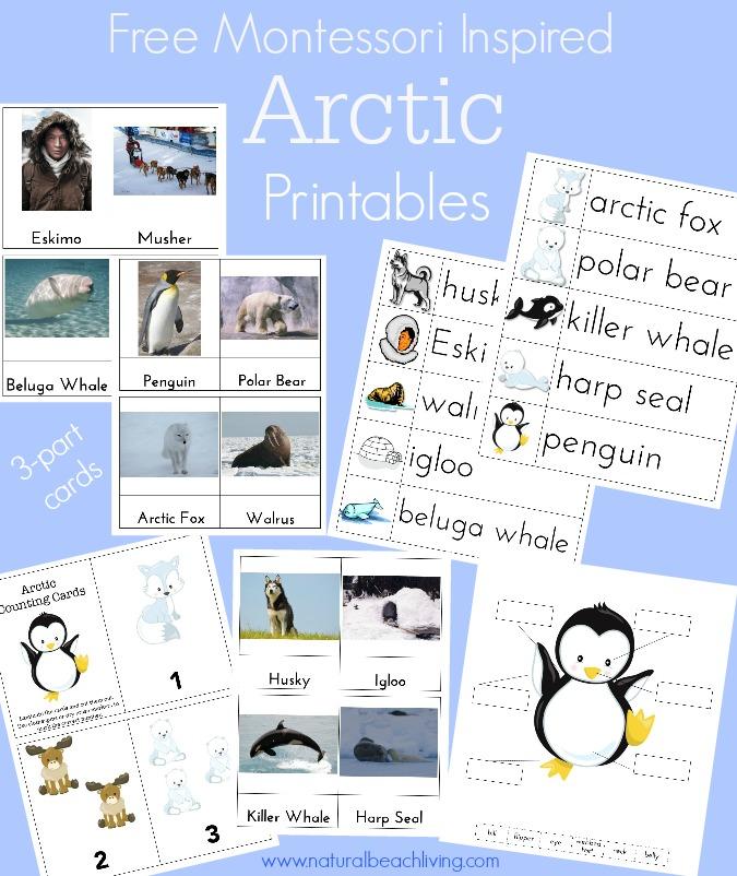 montessori arctic printables
