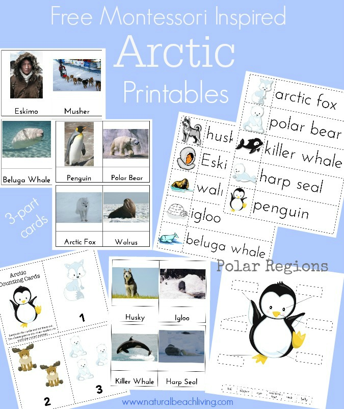 Perfect Montessori Arctic Activities with Free Printables, Polar Regions, Penguins, Math, Language, 3 part cards and so much more.
