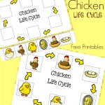 Chicken Life Cycle Free Printables