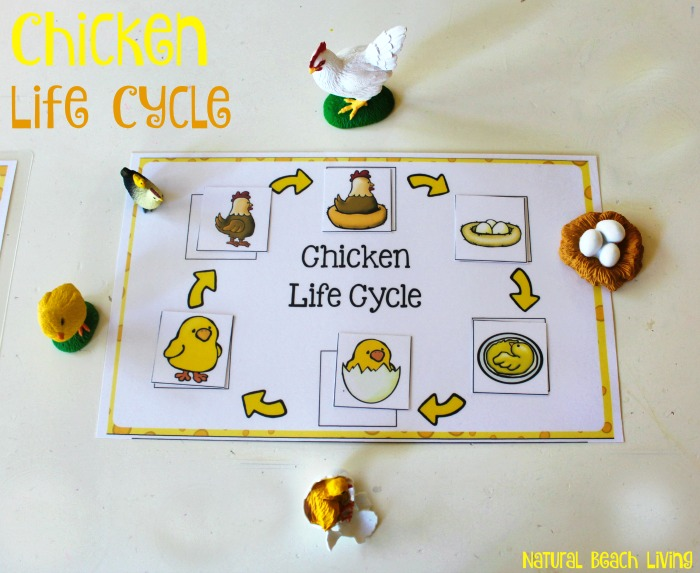 Chicken Life Cycle Free Printables and Activities for Kids, Spring Activities, books, Animals, Perfect for a Farm Theme, and fun hands on learning.