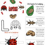 Ladybug Life Cycle Activities & Free Printables