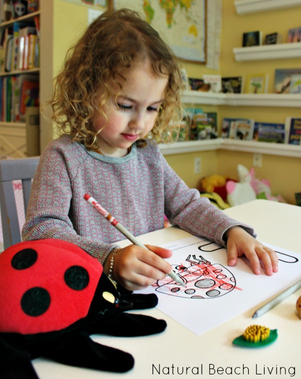 Original together with Lifecycledet likewise Preschool Insect Unit Activities also Ladybugendsound together with B B B C F E C Butterfly Worksheets Preschool Butterfly Life Cycle. on ladybug life cycle printables 2