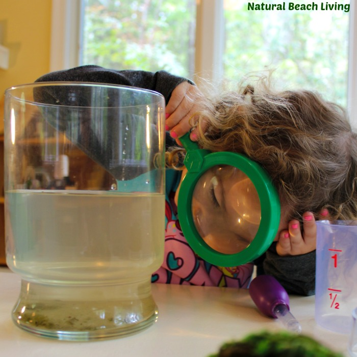 Pond STEM for Preschoolers