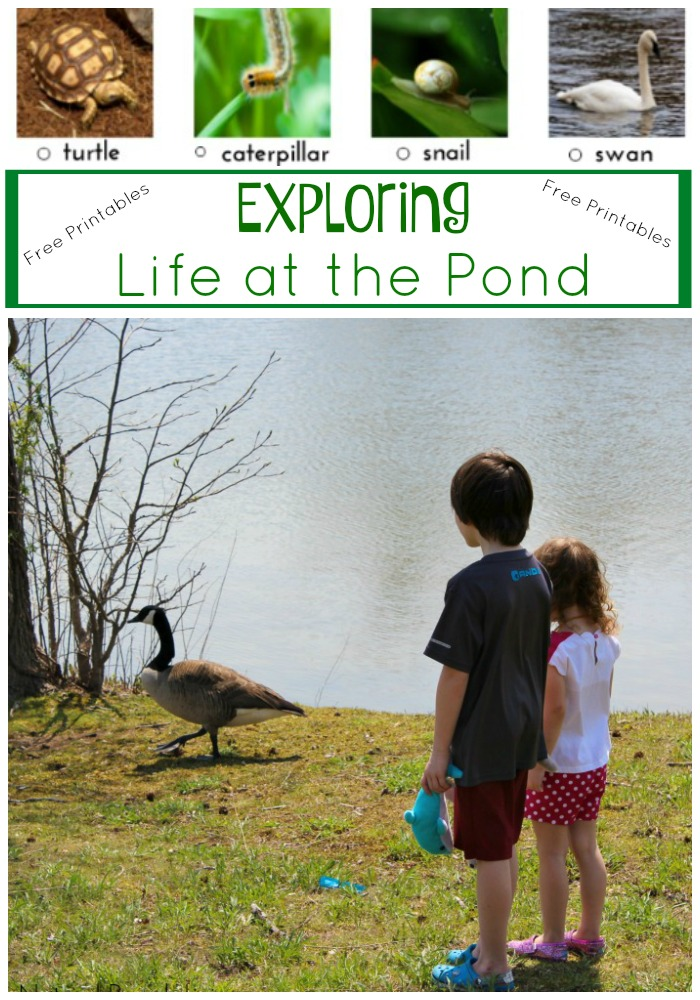 Exploring Life at the Pond (Free Printable Scavenger Hunt)