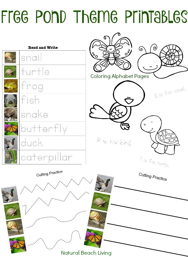 pond theme activities stem free printables coloring pages preschool skills montessori