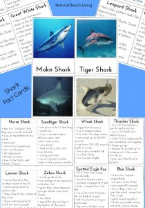 Shark Information for Kids (Free Shark Facts Printables)