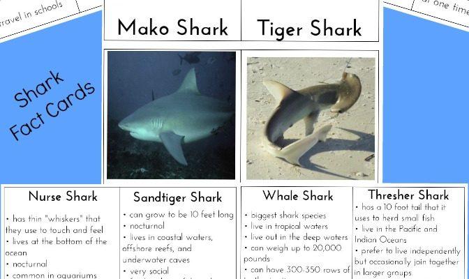 Shark Information for Kids (Free Shark Facts Printables)