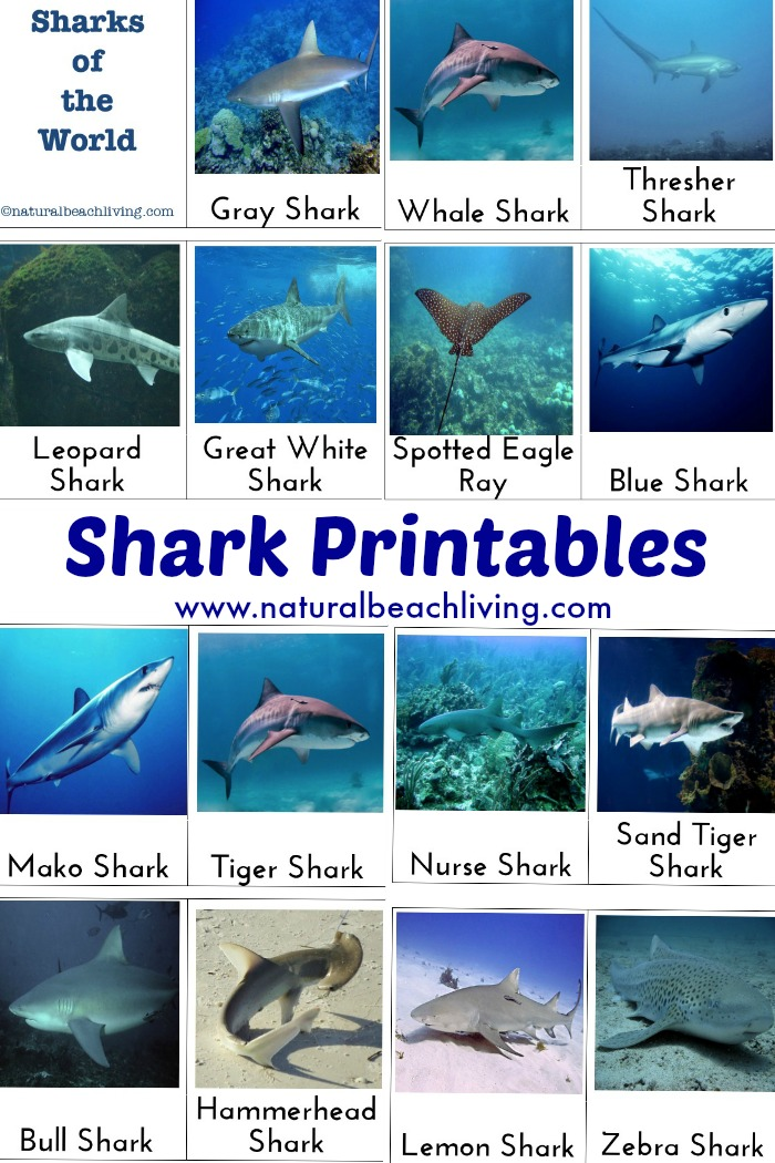 Shark Activities For Kids Free Printables Natural