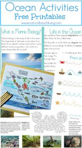 The Best Ocean Unit Study for Kids