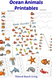 The Best Ocean Animals Preschool Activities