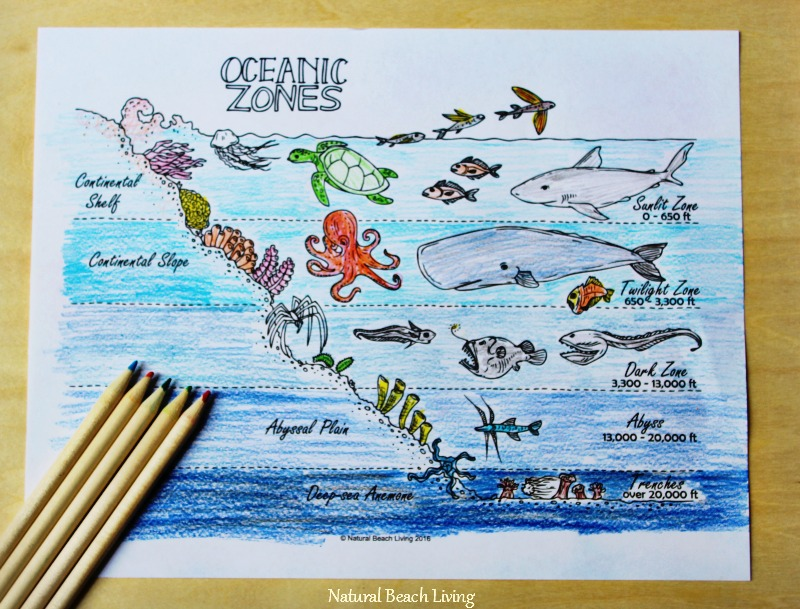 The Best Ocean Unit Study for Kids, Homeschool education, Marine Biology for Kids, Under the Sea Loose Parts play and Summer Nature Table, Ocean Zones and coloring page, Free Printables