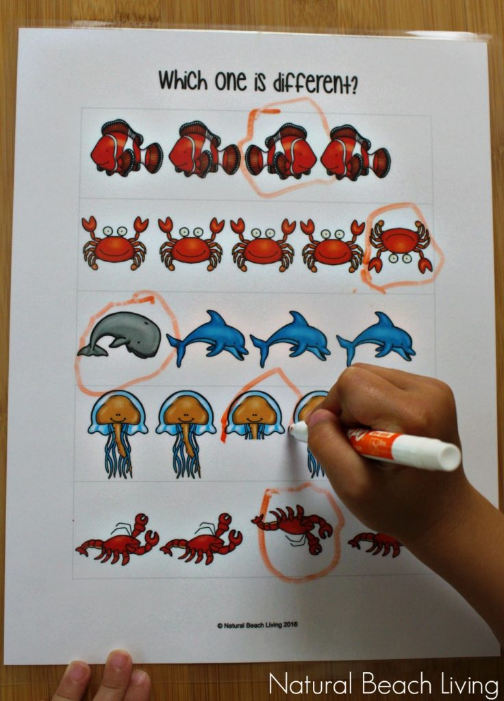 The Best Ocean Animals Preschool Activities and Printables