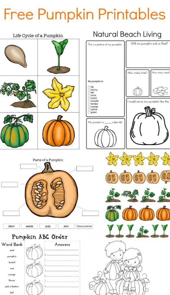 Teaching about Pumpkins, Life cycle, Free Printables, Fall Science,Science Printables, FIAR, Pumpkin Printables, Coloring Pages, Pumpkin activities for kids
