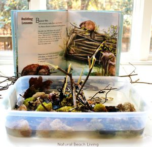 The Perfect Animal Habitat Activities for Preschool
