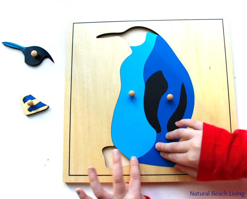 Penguin Activities for Preschoolers and Kindergarten, Montessori preschool, Penguin themes, Unit study, Penguin printables, fine motor, gross motor & More