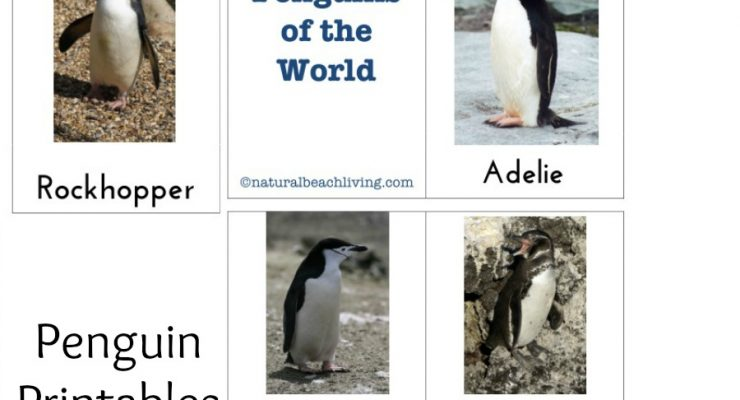 The Best Kindergarten and Preschool Penguin Activities