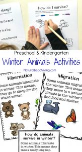 The Ultimate Winter Animals for Preschool Activities